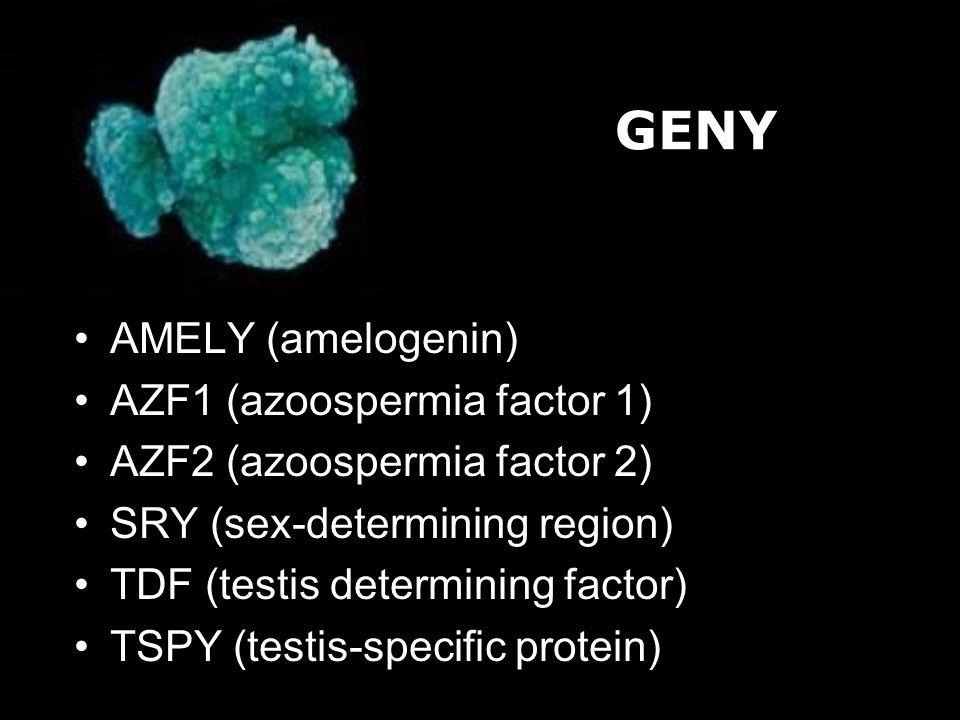 AMELY (amelogenin) AZF1 (azoospermia factor 1) AZF2 (azoospermia factor 2) SRY (sex-determining region) TDF (testis determining factor) TSPY (testis-s