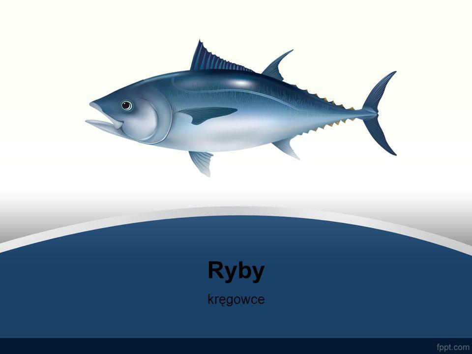Ryby kręgowce