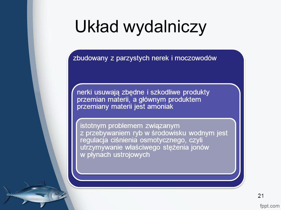 Układ wydalniczy zbudowany z parzystych nerek i moczowodów nerki usuwają zbędne i szkodliwe produkty przemian materii, a głównym produktem przemiany materii jest amoniak istotnym problemem związanym z przebywaniem ryb w środowisku wodnym jest regulacja ciśnienia osmotycznego, czyli utrzymywanie właściwego stężenia jonów w płynach ustrojowych 21