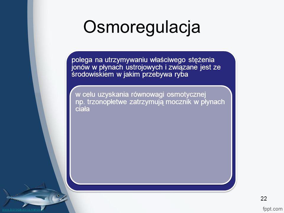 Osmoregulacja polega na utrzymywaniu właściwego stężenia jonów w płynach ustrojowych i związane jest ze środowiskiem w jakim przebywa ryba w celu uzyskania równowagi osmotycznej np.