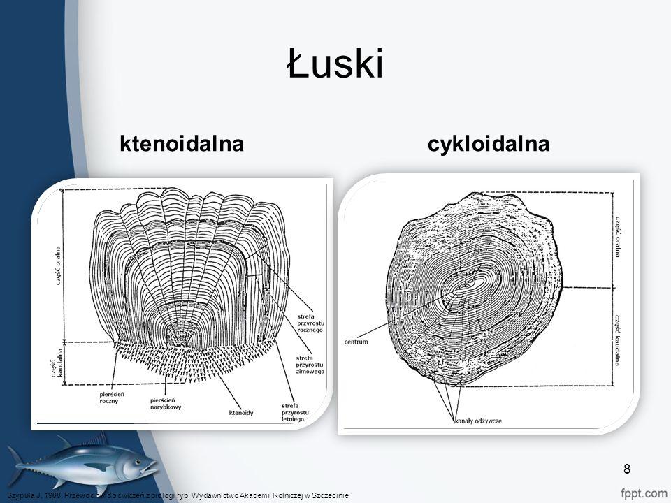 Łuski ktenoidalnacykloidalna Szypuła J. 1988. Przewodnik do ćwiczeń z biologii ryb.