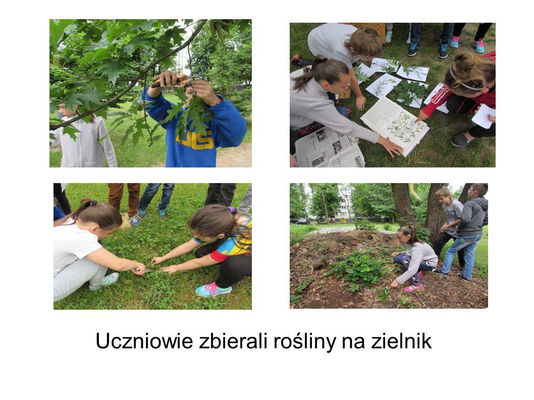 Uczniowie zbierali rośliny na zielnik