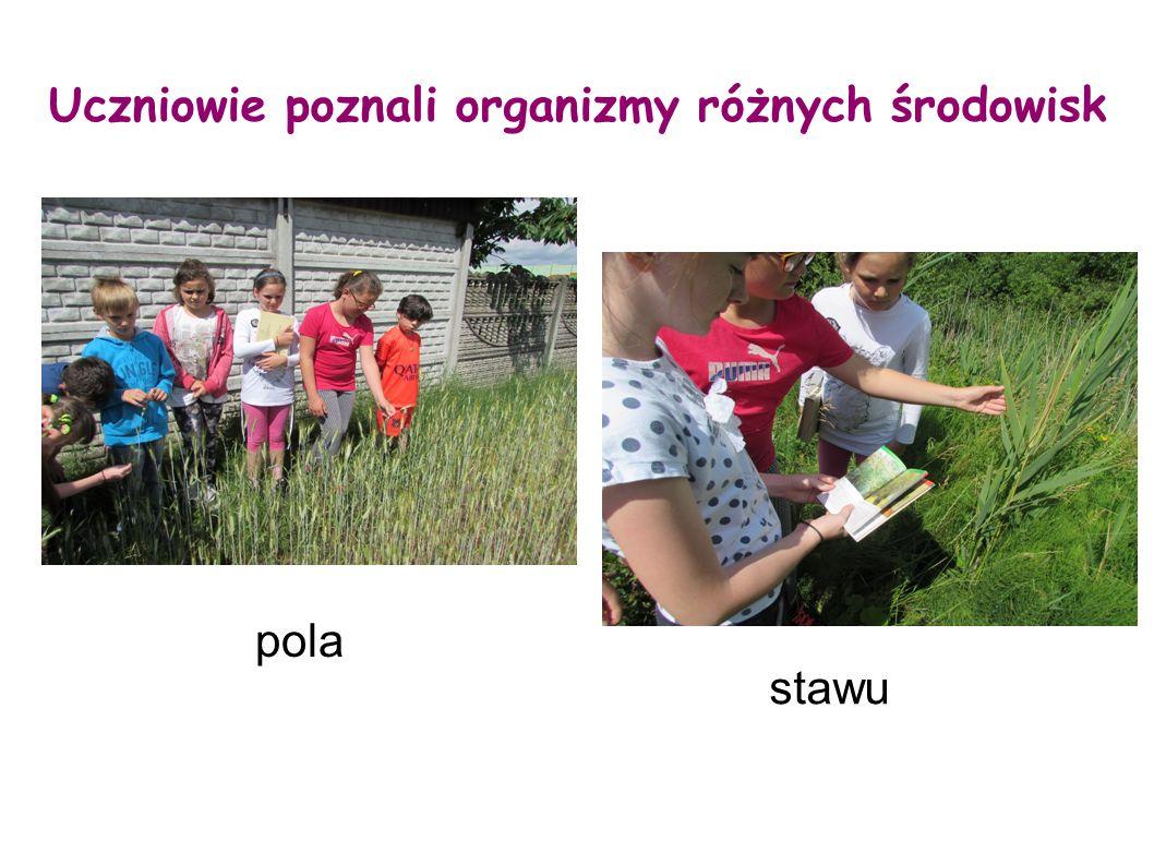Uczniowie poznali organizmy różnych środowisk stawu pola