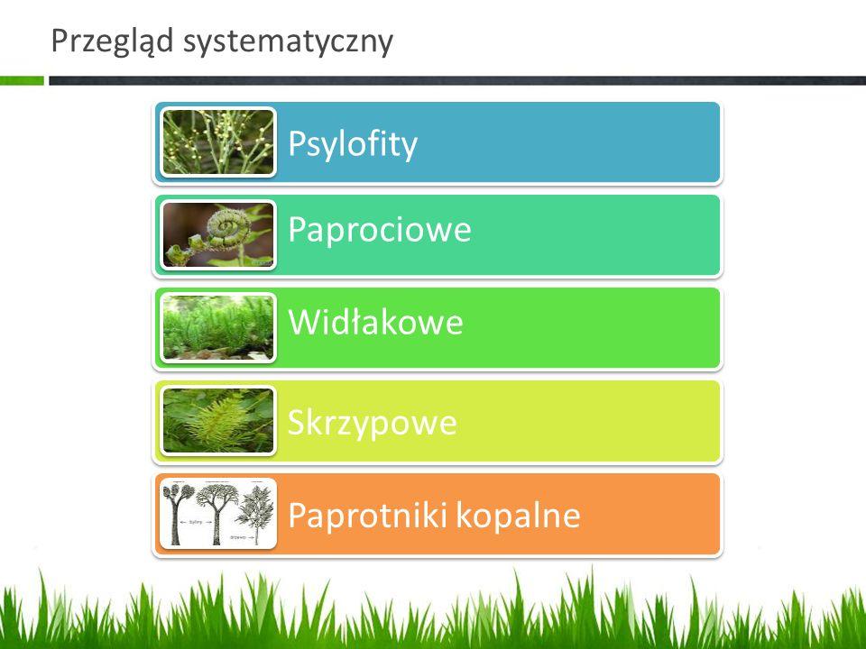 Przegląd systematyczny Psylofity Paprociowe Widłakowe Skrzypowe Paprotniki kopalne