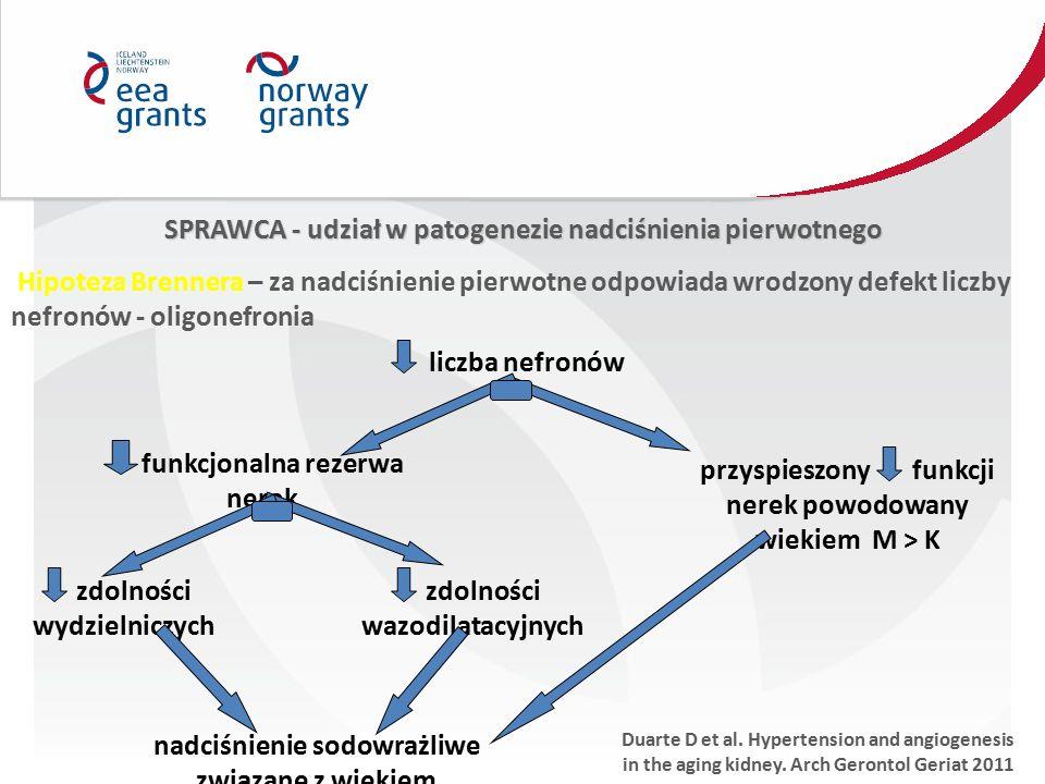 SPRAWCA - udział w patogenezie nadciśnienia pierwotnego Hipoteza Brennera – za nadciśnienie pierwotne odpowiada wrodzony defekt liczby nefronów - olig