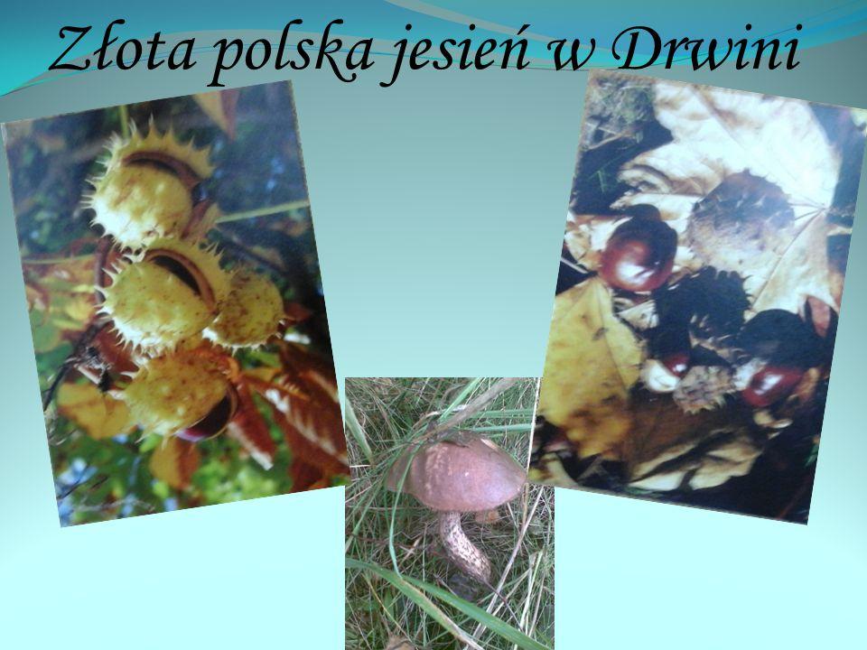 Złota polska jesień w Drwini