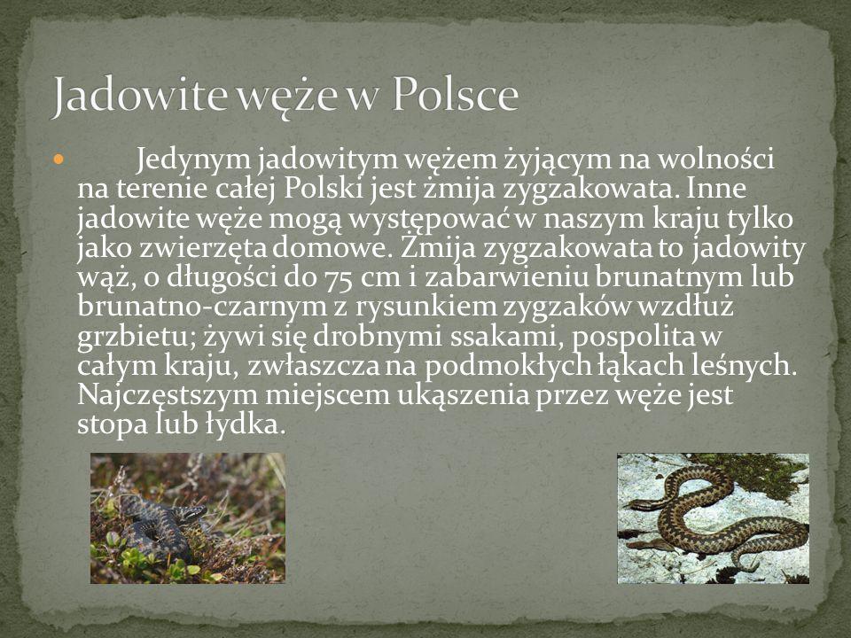 Jedynym jadowitym wężem żyjącym na wolności na terenie całej Polski jest żmija zygzakowata. Inne jadowite węże mogą występować w naszym kraju tylko ja