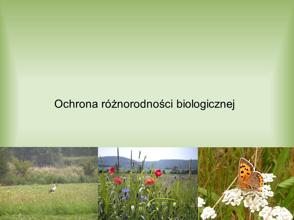 Uwarunkowania krajowe Konstytucja RP, II Polityka ekologiczna państwa na lata 2007-2010, z uwzględnieniem perspektywy do 2016: –Poprawa stanu środowiska poprzez usunięcie lub ograniczenie zagrożeń dla zachowania różnorodności biologicznej i krajobrazowej, –zachowanie, odtworzenie i wzbogacanie zasobów przyrody, –osiągnięcie powszechnej akceptacji dla zachowania całości spuścizny przyrodniczej i kulturowej Polski.