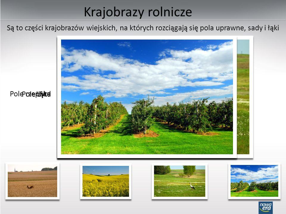 Krajobrazy rolnicze Są to części krajobrazów wiejskich, na których rozciągają się pola uprawne, sady i łąki Pole żyta Pole rzepakuŁąkaSad