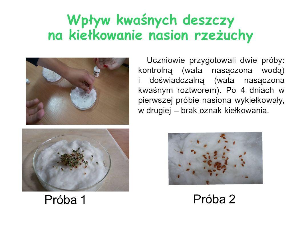 Wpływ kwaśnych deszczy na kiełkowanie nasion rzeżuchy Uczniowie przygotowali dwie próby: kontrolną (wata nasączona wodą) i doświadczalną (wata nasączo