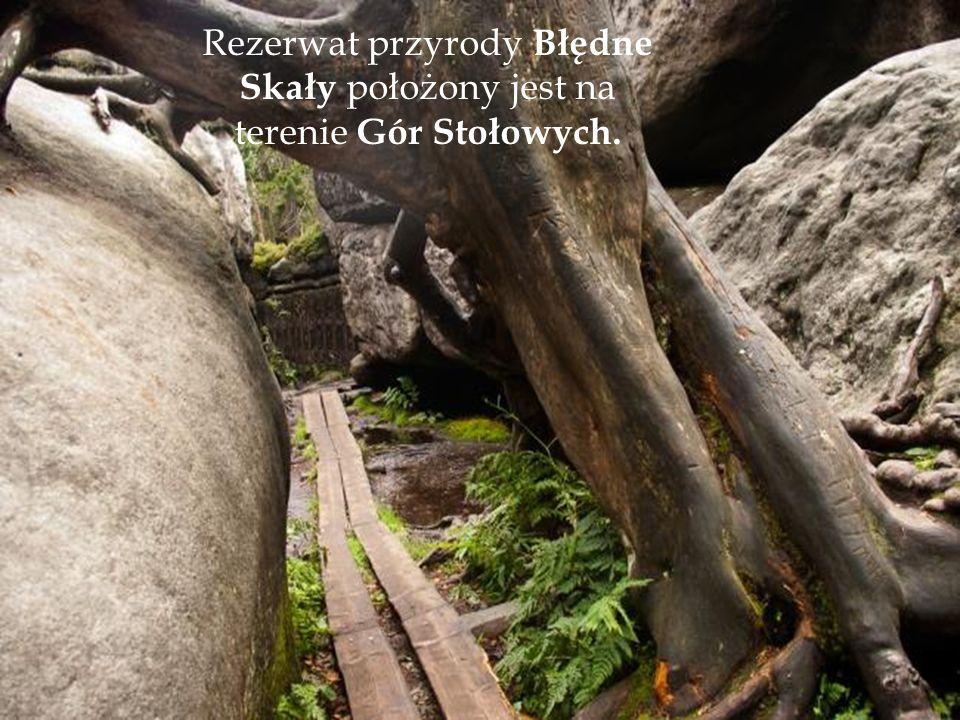 Rezerwat przyrody Błędne Skały położony jest na terenie Gór Stołowych.