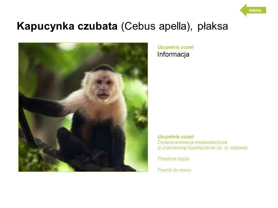 Kapucynka czubata (Cebus apella), płaksa Uzupełnia uczeń Informacja Uzupełnia uczeń Dodana animacja niestandardowa (z poprzednią) hiperłącze do np.