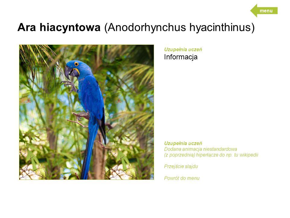 Ara hiacyntowa (Anodorhynchus hyacinthinus) Uzupełnia uczeń Informacja Uzupełnia uczeń Dodana animacja niestandardowa (z poprzednią) hiperłącze do np.