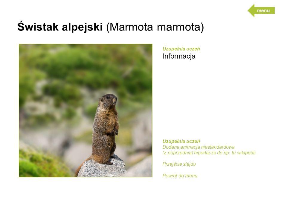 Świstak alpejski (Marmota marmota) Uzupełnia uczeń Informacja Uzupełnia uczeń Dodana animacja niestandardowa (z poprzednią) hiperłącze do np.