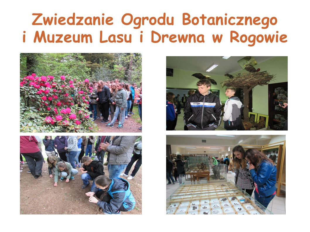 Zwiedzanie Ogrodu Botanicznego i Muzeum Lasu i Drewna w Rogowie