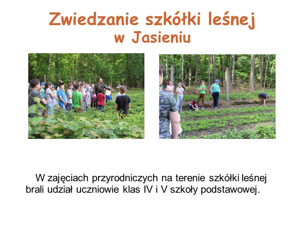 Zwiedzanie szkółki leśnej w Jasieniu W zajęciach przyrodniczych na terenie szkółki leśnej brali udział uczniowie klas IV i V szkoły podstawowej.