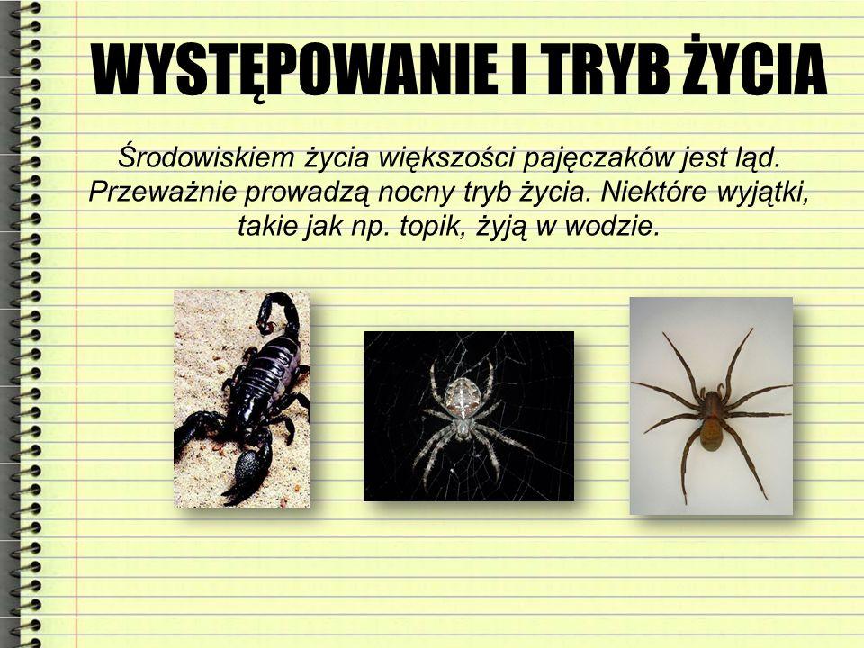 WYSTĘPOWANIE I TRYB ŻYCIA Środowiskiem życia większości pajęczaków jest ląd. Przeważnie prowadzą nocny tryb życia. Niektóre wyjątki, takie jak np. top
