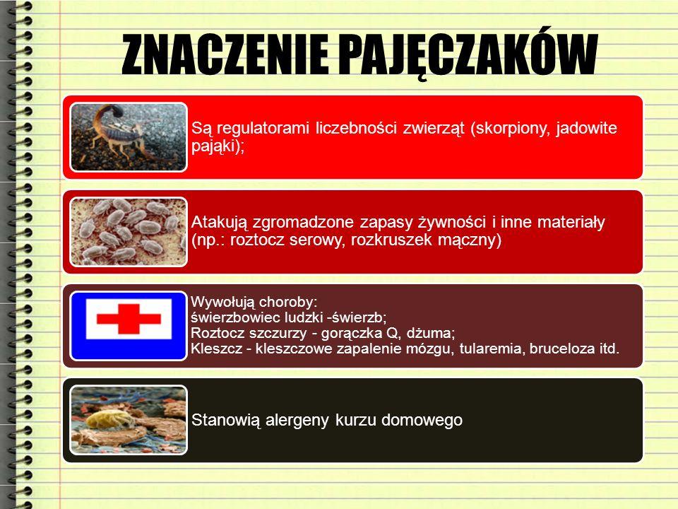 ZNACZENIE PAJĘCZAKÓW Są regulatorami liczebności zwierząt (skorpiony, jadowite pająki); Atakują zgromadzone zapasy żywności i inne materiały (np.: roz