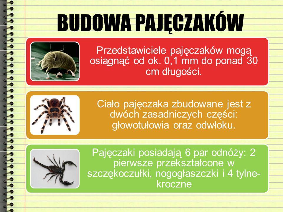BUDOWA PAJĘCZAKÓW Przedstawiciele pajęczaków mogą osiągnąć od ok. 0,1 mm do ponad 30 cm długości. Ciało pajęczaka zbudowane jest z dwóch zasadniczych