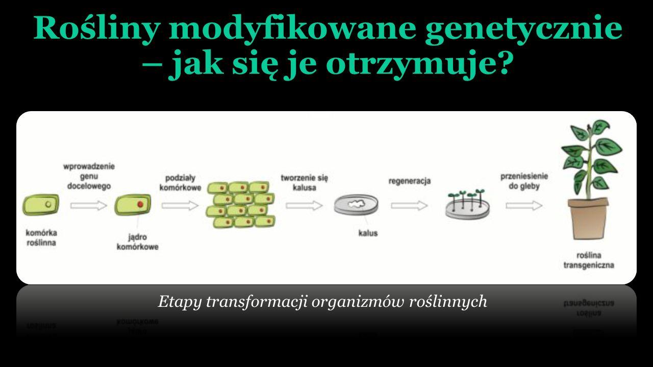 Rośliny modyfikowane genetycznie – cele modyfikacji POLEPSZENIE WARTOŚCI UŻYTKOWEJ WYKORZYSTANIE MOŻLIWOŚCI PRODUKCYJNYCH (BIOFABRYKI) przemysł np.