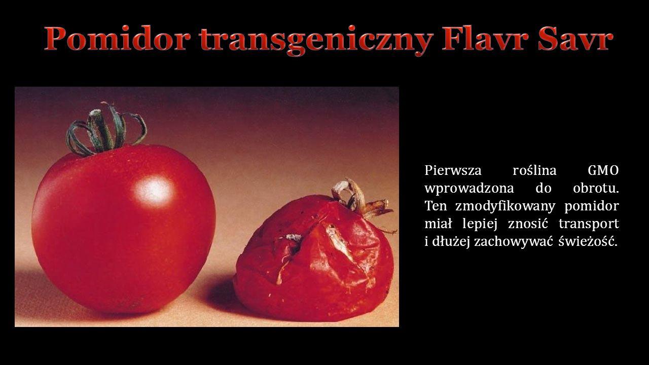 Pierwsza roślina GMO wprowadzona do obrotu.