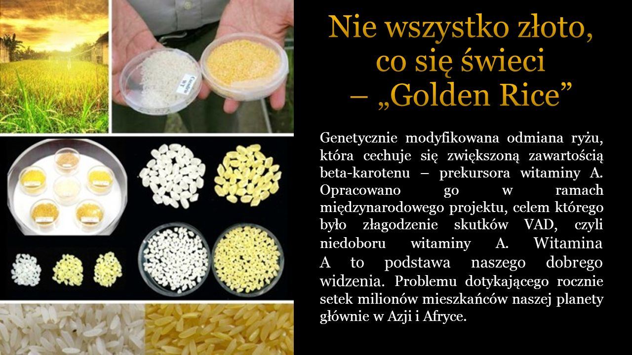 Genetycznie modyfikowana odmiana ryżu, która cechuje się zwiększoną zawartością beta-karotenu – prekursora witaminy A.