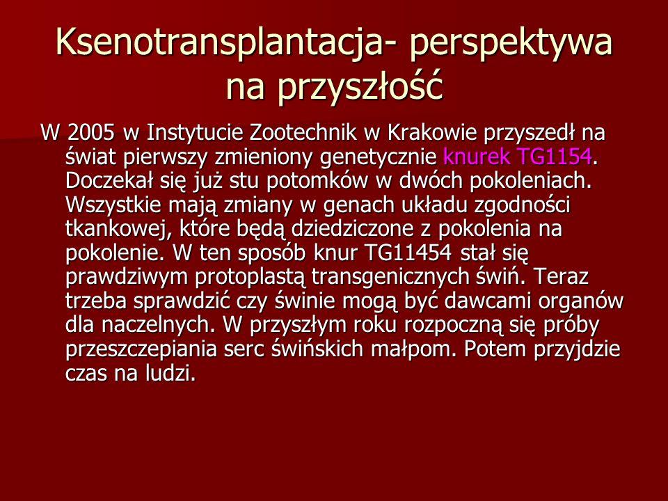 Ksenotransplantacja- perspektywa na przyszłość W 2005 w Instytucie Zootechnik w Krakowie przyszedł na świat pierwszy zmieniony genetycznie knurek TG11