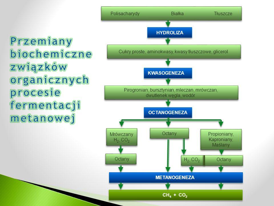 Polisacharydy Białka Tłuszcze HYDROLIZA Cukry proste, aminokwasy, kwasy tłuszczowe, glicerol KWASOGENEZA Pirogronian, bursztynian, mleczan, mrówczan, dwutlenek węgla, wodór Pirogronian, bursztynian, mleczan, mrówczan, dwutlenek węgla, wodór OCTANOGENEZA Mrówczany H 2, CO 2 Mrówczany H 2, CO 2 Octany Propioniany, Kaproniany, Maślany Octany H 2, CO 2 Octany METANOGENEZA CH 4 + CO 2