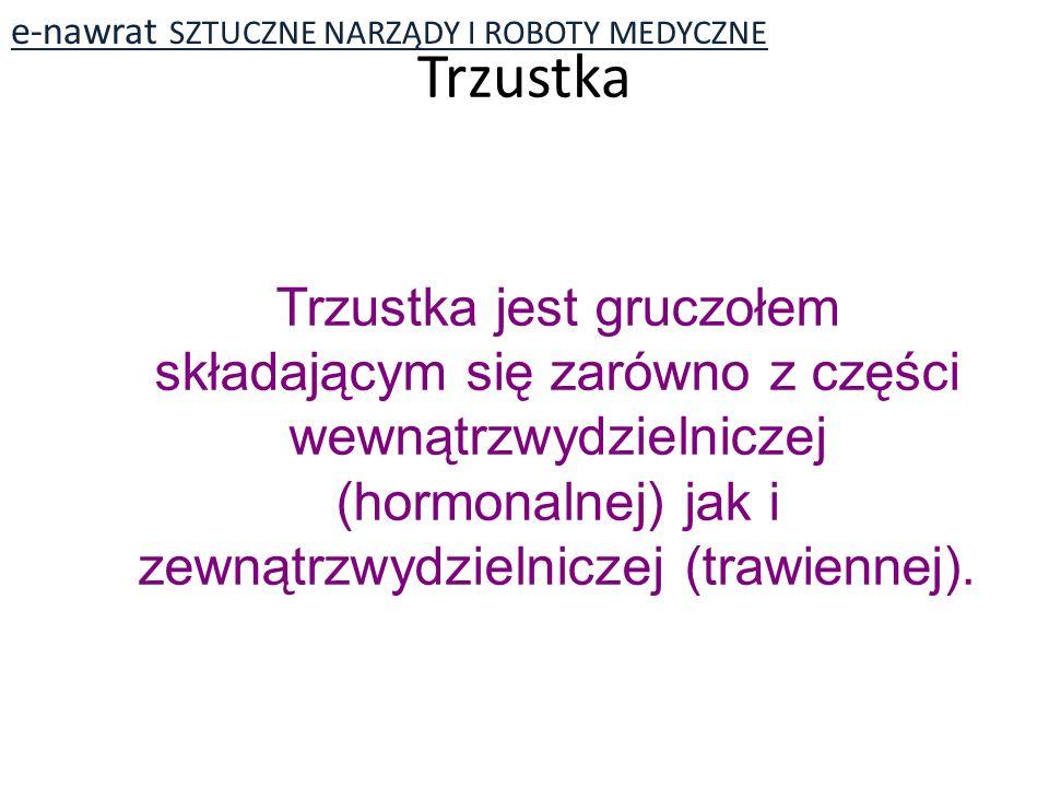 Trzustka Trzustka jest gruczołem składającym się zarówno z części wewnątrzwydzielniczej (hormonalnej) jak i zewnątrzwydzielniczej (trawiennej).