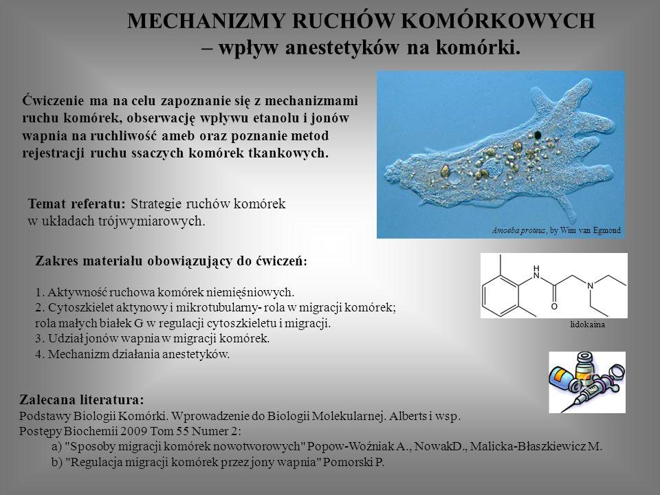 MECHANIZMY RUCHÓW KOMÓRKOWYCH – wpływ anestetyków na komórki.