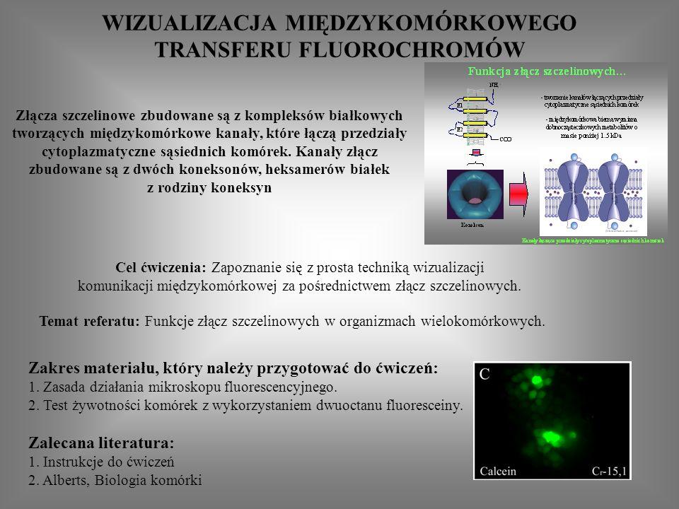 WIZUALIZACJA MIĘDZYKOMÓRKOWEGO TRANSFERU FLUOROCHROMÓW Złącza szczelinowe zbudowane są z kompleksów białkowych tworzących międzykomórkowe kanały, które łączą przedziały cytoplazmatyczne sąsiednich komórek.