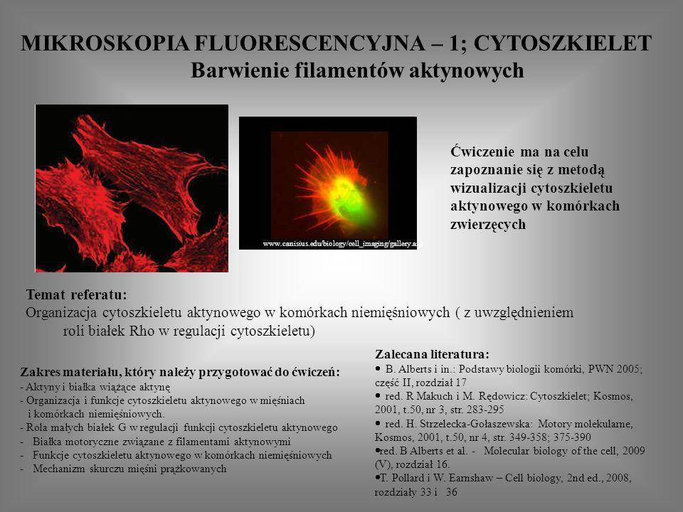 MIKROSKOPIA FLUORESCENCYJNA – 1; CYTOSZKIELET Barwienie filamentów aktynowych Zakres materiału, który należy przygotować do ćwiczeń: - Aktyny i białka wiążące aktynę - Organizacja i funkcje cytoszkieletu aktynowego w mięśniach i komórkach niemięśniowych.