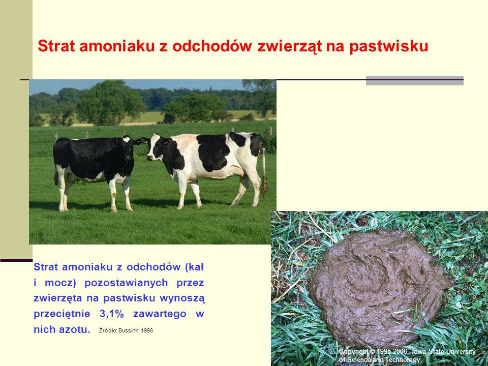Strat amoniaku z odchodów (kał i mocz) pozostawianych przez zwierzęta na pastwisku wynoszą przeciętnie 3,1% zawartego w nich azotu.