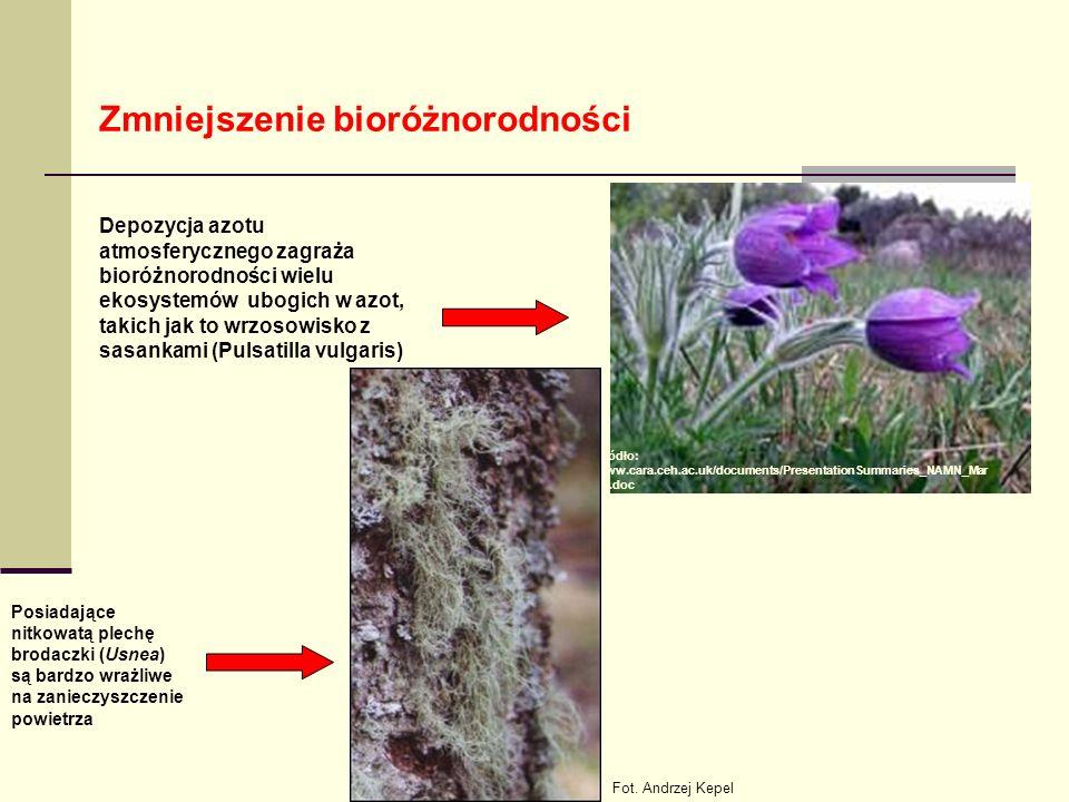 Zmniejszenie bioróżnorodności Depozycja azotu atmosferycznego zagraża bioróżnorodności wielu ekosystemów ubogich w azot, takich jak to wrzosowisko z sasankami (Pulsatilla vulgaris) Posiadające nitkowatą plechę brodaczki (Usnea) są bardzo wrażliwe na zanieczyszczenie powietrza Źródło: www.cara.ceh.ac.uk/documents/PresentationSummaries_NAMN_Mar 05.doc Fot.