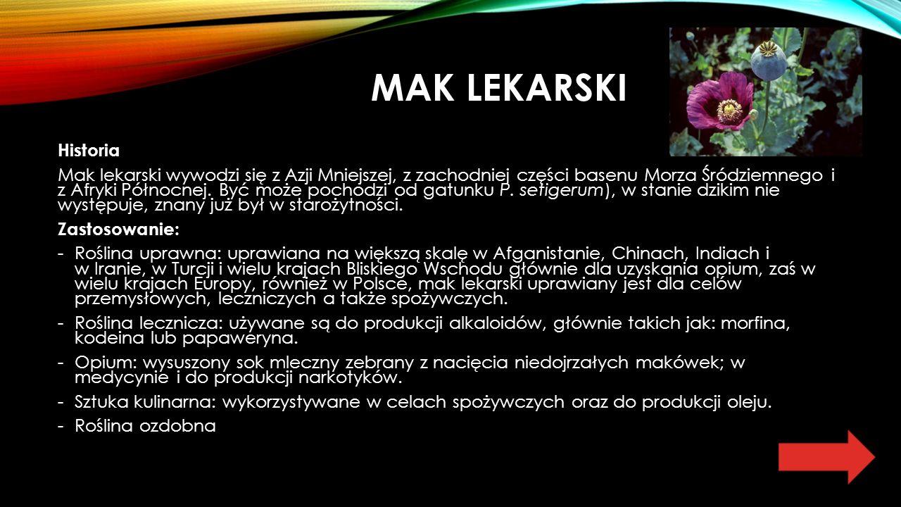 MAK LEKARSKI Historia Mak lekarski wywodzi się z Azji Mniejszej, z zachodniej części basenu Morza Śródziemnego i z Afryki Północnej.