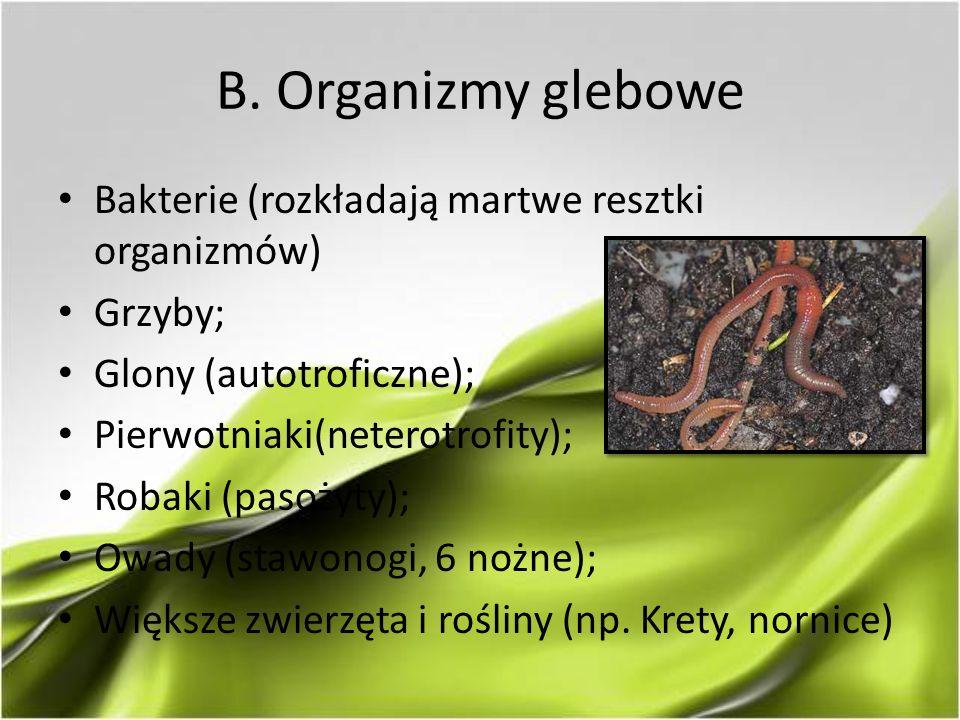 B. Organizmy glebowe Bakterie (rozkładają martwe resztki organizmów) Grzyby; Glony (autotroficzne); Pierwotniaki(neterotrofity); Robaki (pasożyty); Ow
