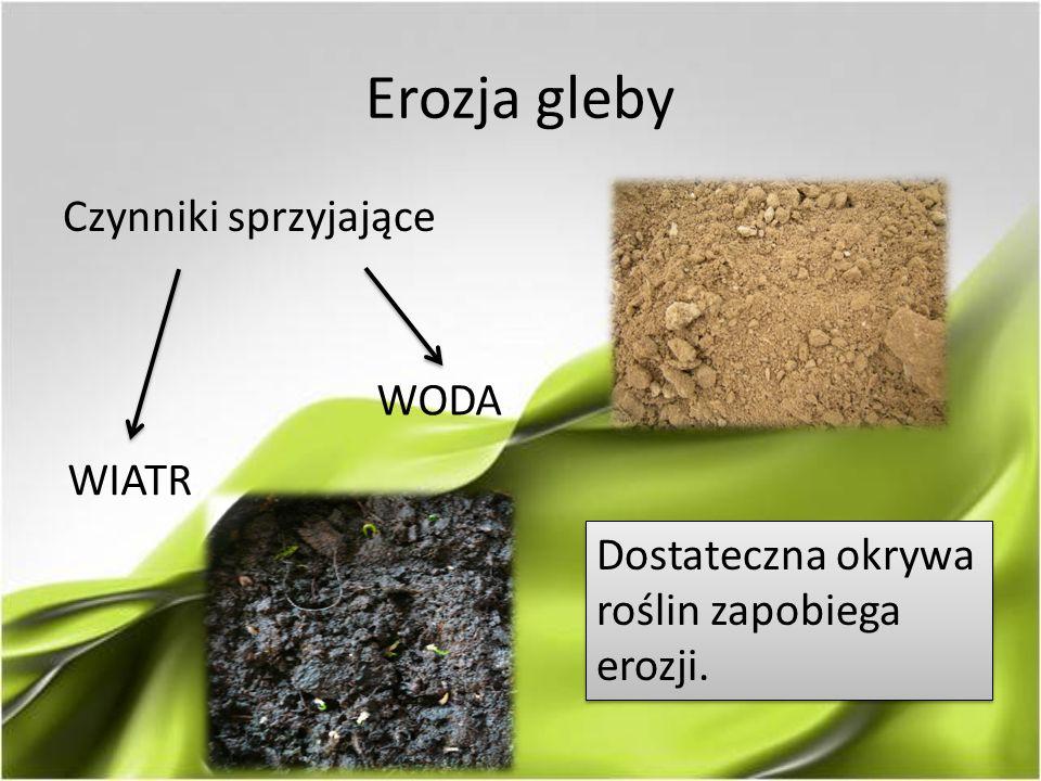 Erozja gleby Czynniki sprzyjające WIATR WODA Dostateczna okrywa roślin zapobiega erozji.