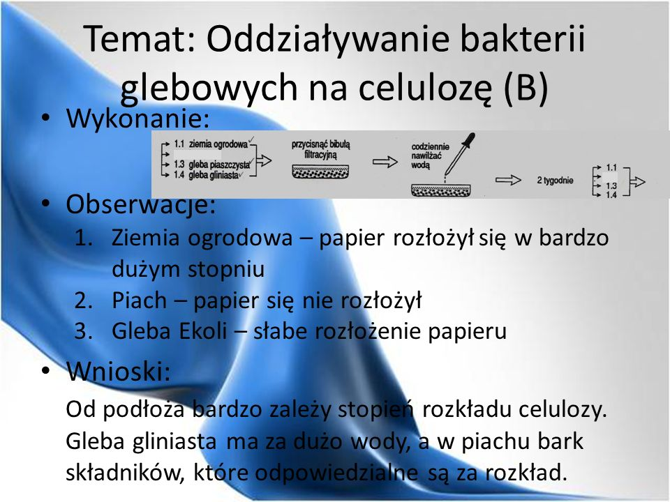 Temat: Oddziaływanie bakterii glebowych na celulozę (B) Wykonanie: Obserwacje: 1.Ziemia ogrodowa – papier rozłożył się w bardzo dużym stopniu 2.Piach – papier się nie rozłożył 3.Gleba Ekoli – słabe rozłożenie papieru Wnioski: Od podłoża bardzo zależy stopień rozkładu celulozy.