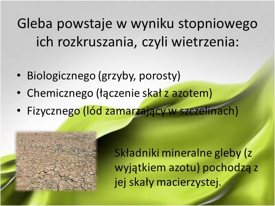 Gleba powstaje w wyniku stopniowego ich rozkruszania, czyli wietrzenia: Biologicznego (grzyby, porosty) Chemicznego (łączenie skał z azotem) Fizyczneg