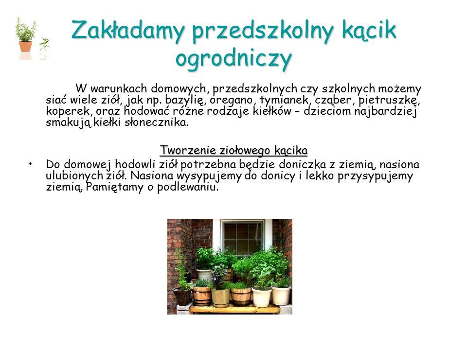 Zakładamy przedszkolny kącik ogrodniczy W warunkach domowych, przedszkolnych czy szkolnych możemy siać wiele ziół, jak np.