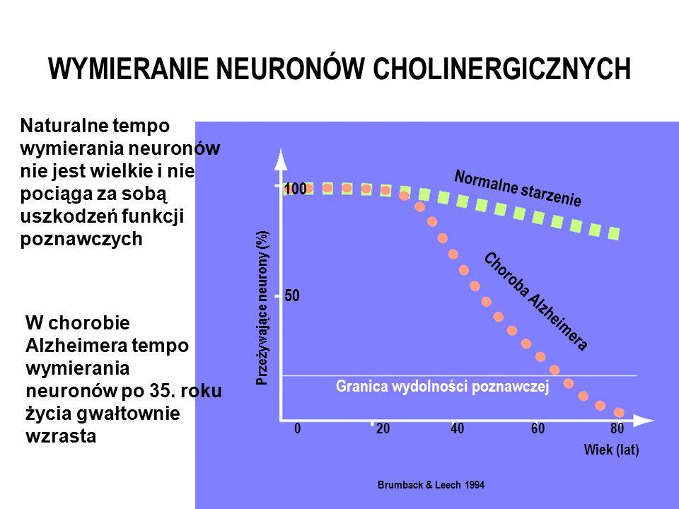 Normalne starzenie Granica wydolności poznawczej Przeżywające neurony (%) 0 50 20406080 100 Wiek (lat) Brumback & Leech 1994 Naturalne tempo wymierania neuronów nie jest wielkie i nie pociąga za sobą uszkodzeń funkcji poznawczych W chorobie Alzheimera tempo wymierania neuronów po 35.