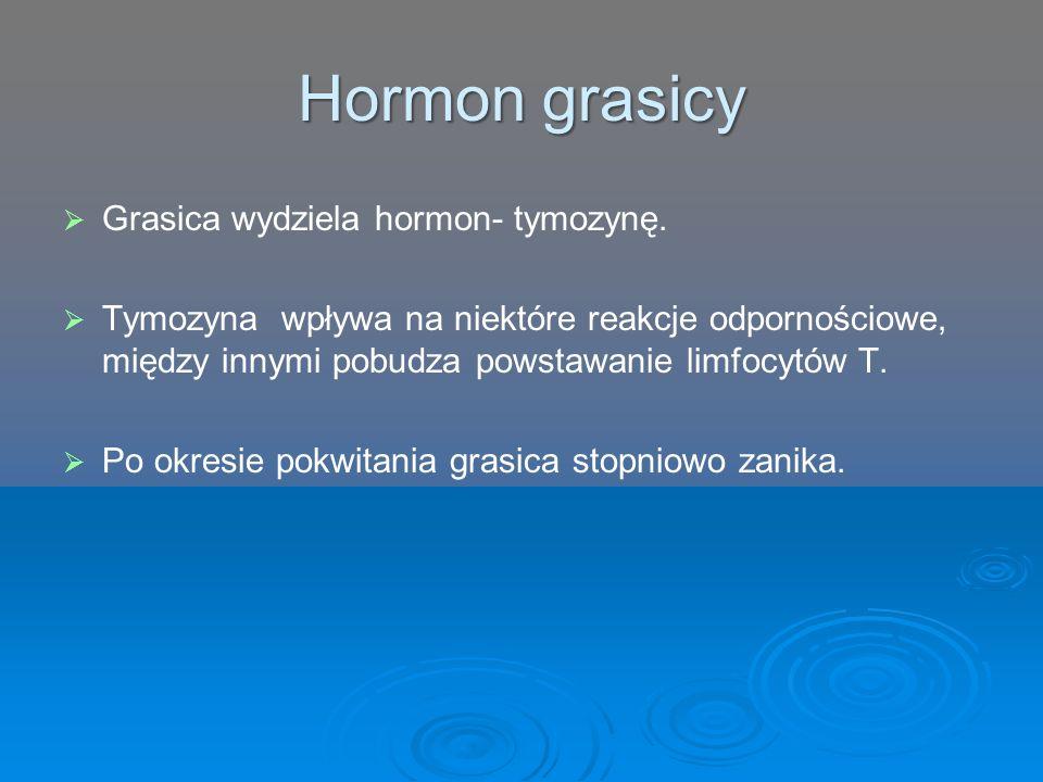 Hormon grasicy   Grasica wydziela hormon- tymozynę.   Tymozyna wpływa na niektóre reakcje odpornościowe, między innymi pobudza powstawanie limfocy
