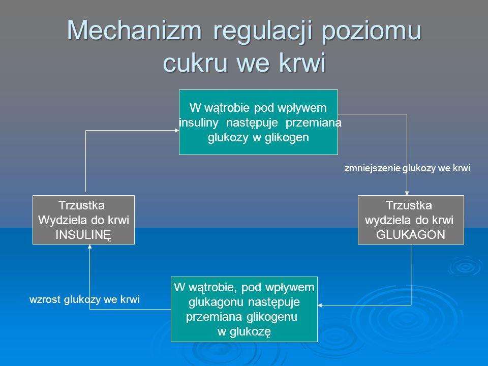 Mechanizm regulacji poziomu cukru we krwi zmniejszenie glukozy we krwi wzrost glukozy we krwi W wątrobie pod wpływem insuliny następuje przemiana gluk