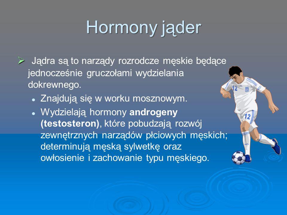 Hormony jąder   Jądra są to narządy rozrodcze męskie będące jednocześnie gruczołami wydzielania dokrewnego. Znajdują się w worku mosznowym. Wydziela
