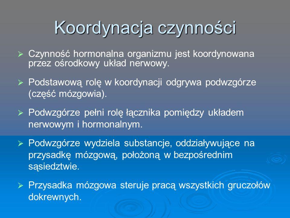 Koordynacja czynności   Czynność hormonalna organizmu jest koordynowana przez ośrodkowy układ nerwowy.   Podstawową rolę w koordynacji odgrywa pod