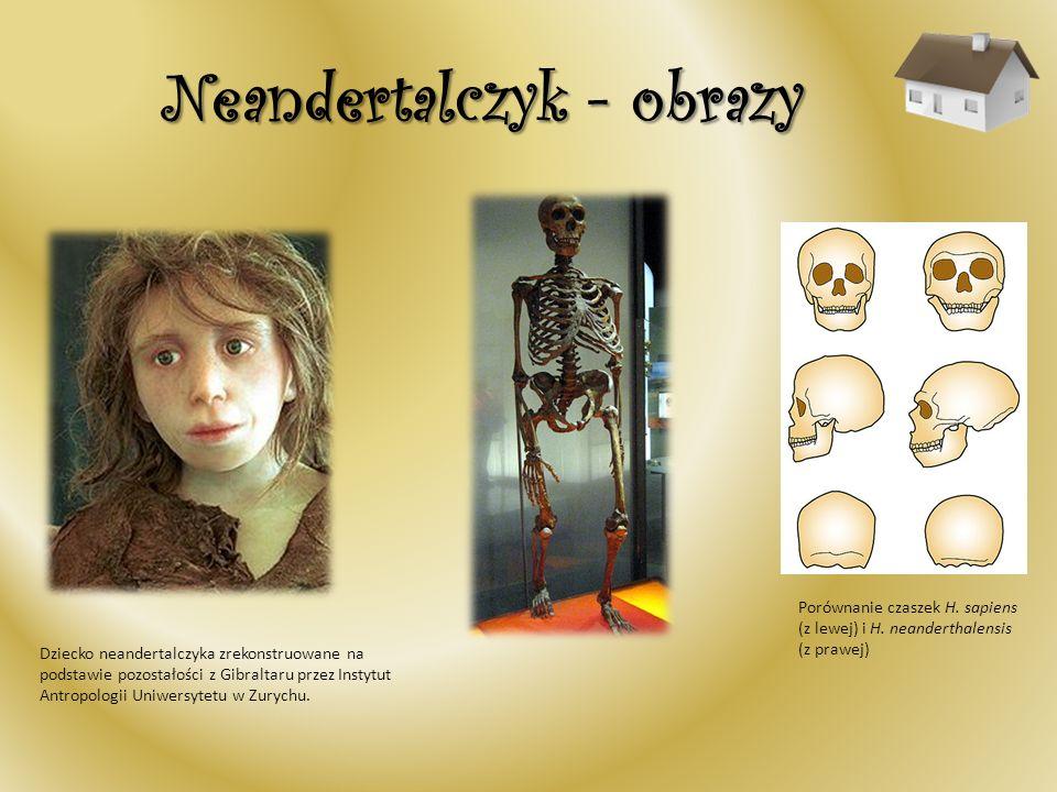 Neandertalczyk - obrazy Dziecko neandertalczyka zrekonstruowane na podstawie pozostałości z Gibraltaru przez Instytut Antropologii Uniwersytetu w Zury