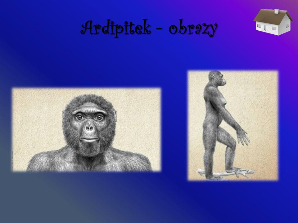 Australopitek Australopitek - (Australopithecus, dosł.