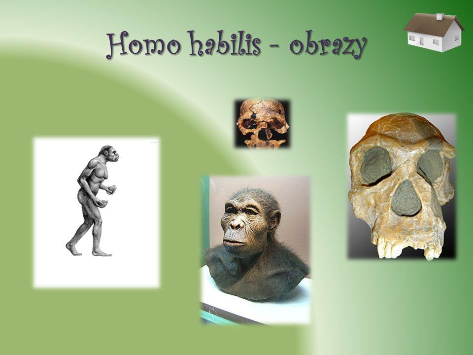 Homo habilis - obrazy