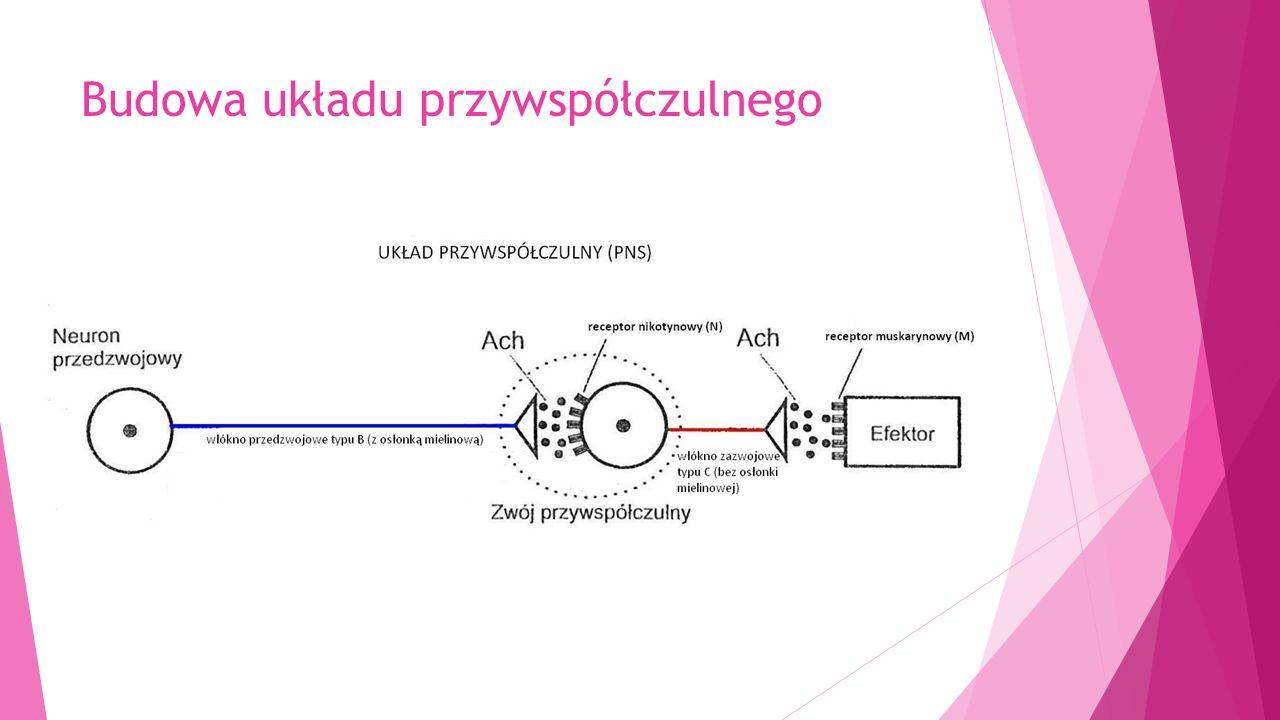 Inhibitory odwracalne (pochodne kwasu karbaminowego) DZIAŁAJĄCE KRÓTKO Fizostygmina- 0,5-2 h, obecnie jedynie jako antidotum w zatruciach związkami parasymatykolitycznymi, dobrze przenika do OUN, zbyt szybko wykonana iniekcja może wywołać drgawki, bradykardię.