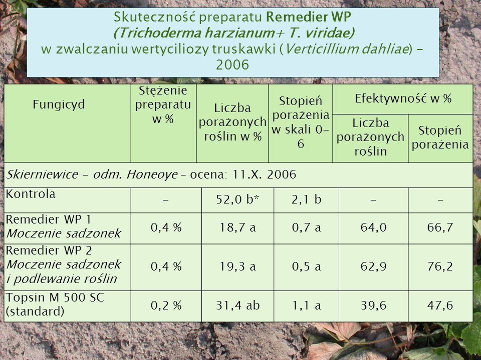 Skuteczność preparatu Remedier WP (Trichoderma harzianum+ T.